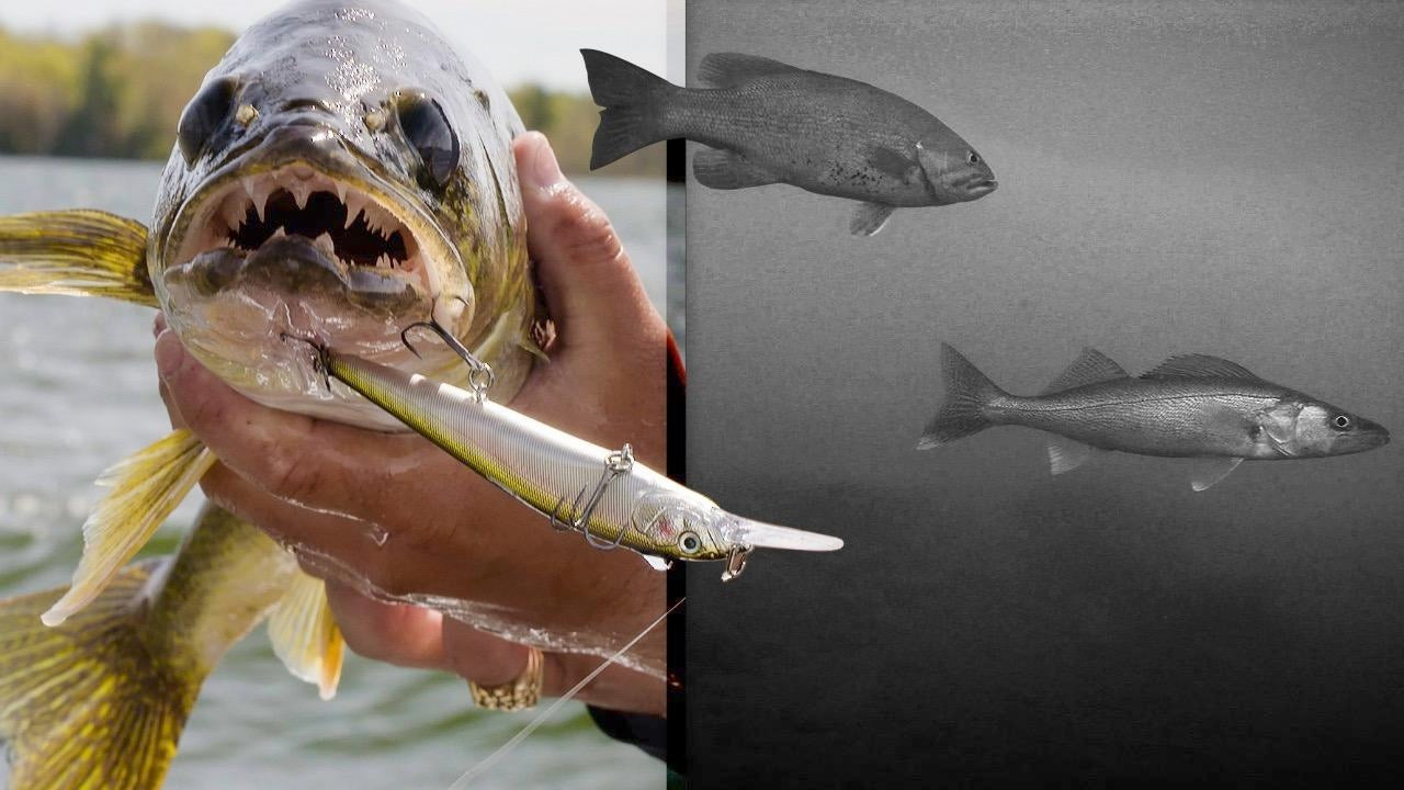 Spring Jerkbait Tips for Smallmouth Bass and Walleye