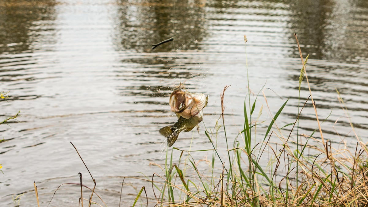 5 Tips for Bank Fishing in Low-Water Conditions