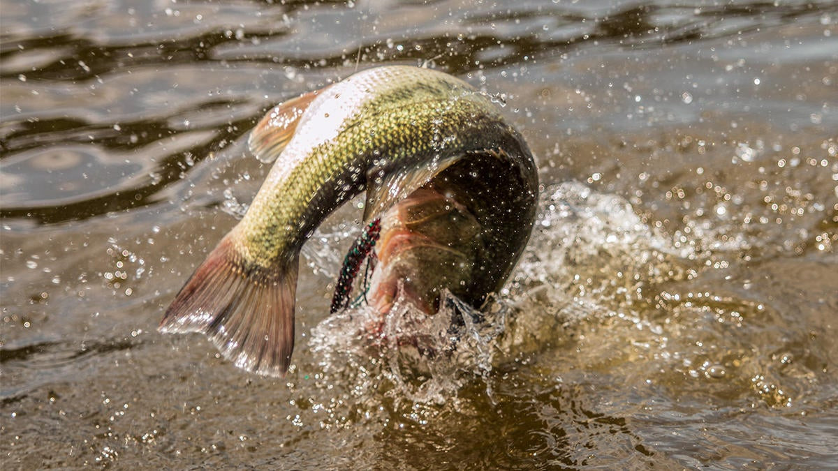 3 Bass Fishing Tournament Lessons I Learned the Hard Way