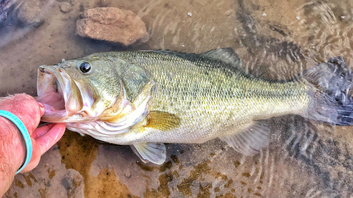 4 Ways Pond Fishing Makes You a Better Big-Water Angler