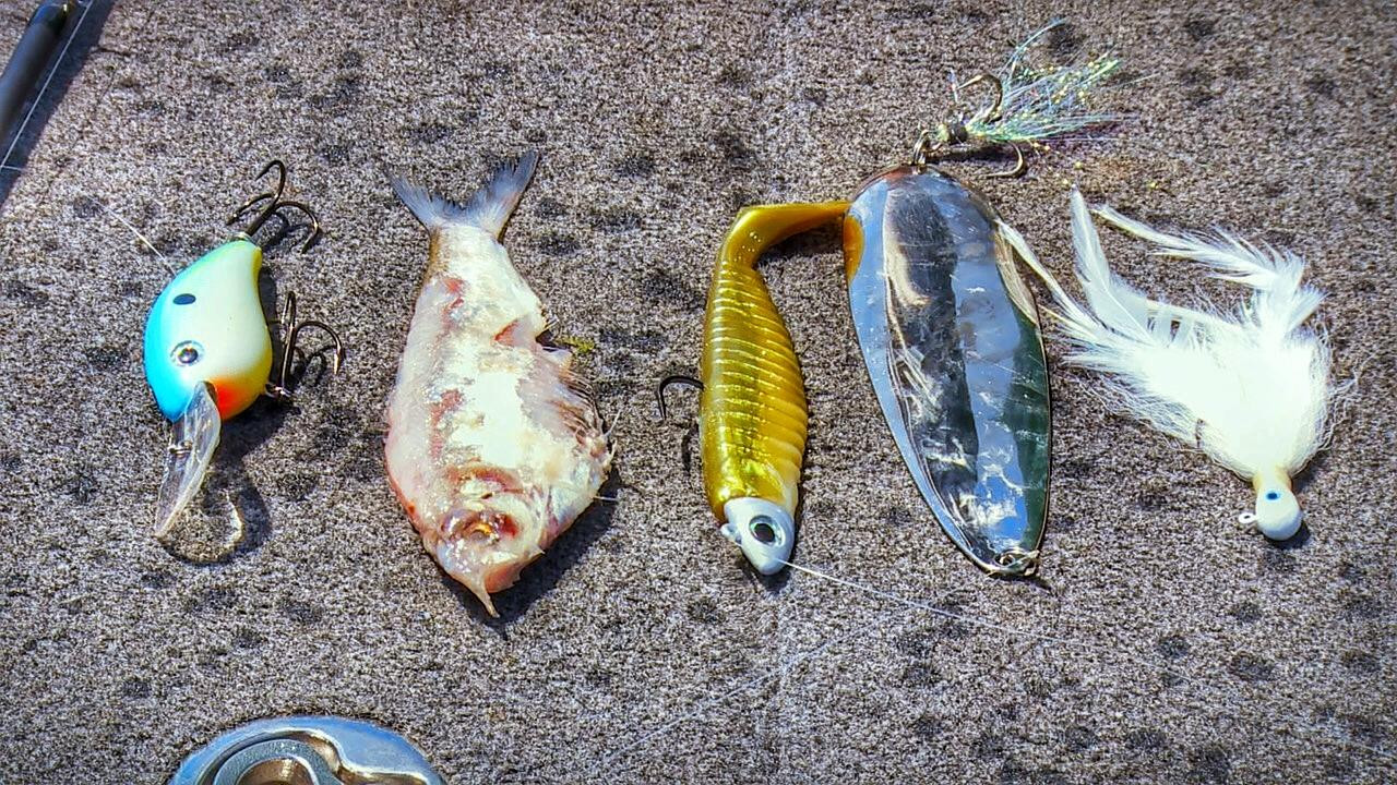 Ledge Baits for Bass Fishing   What They Look Like Underwater
