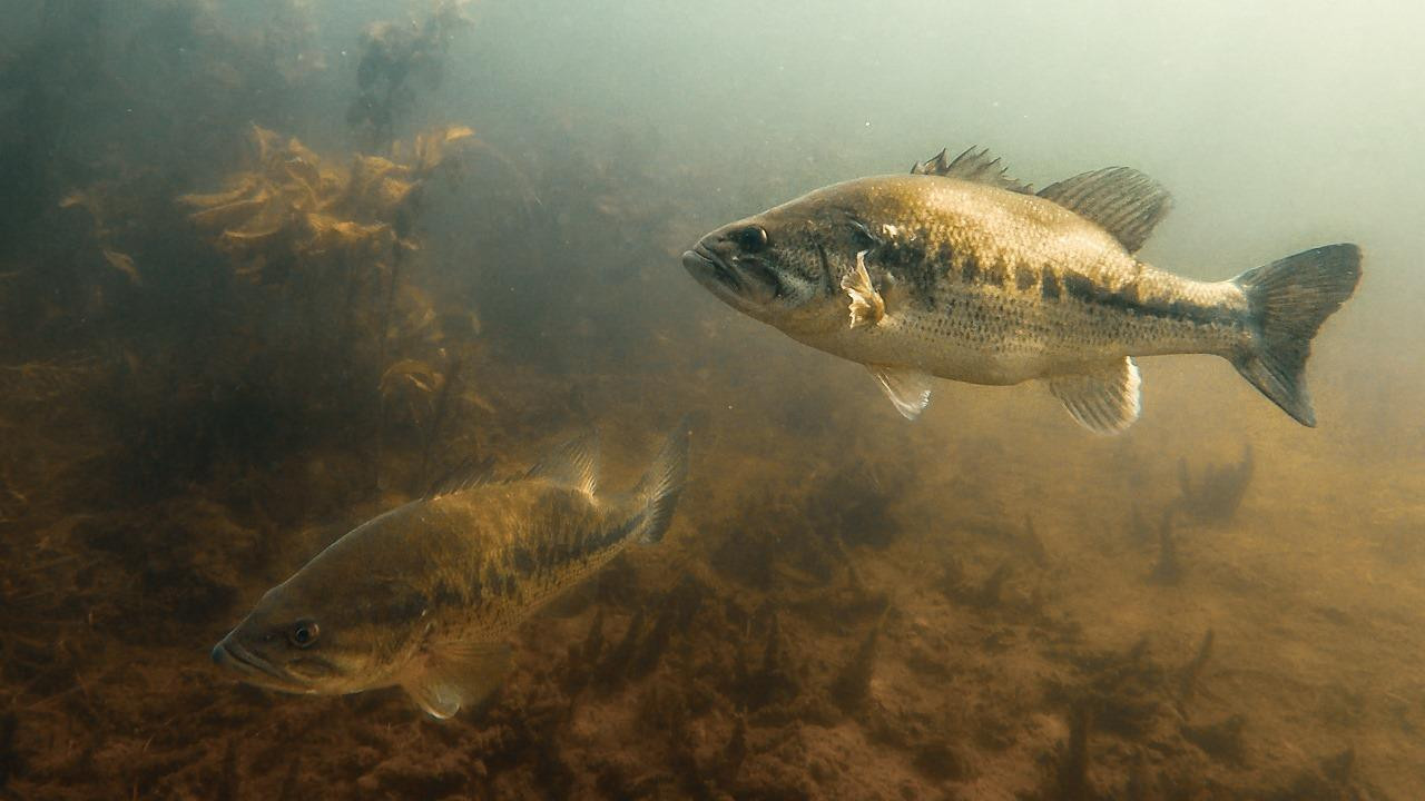 Where to Find Bass in the Spring | Underwater Analysis