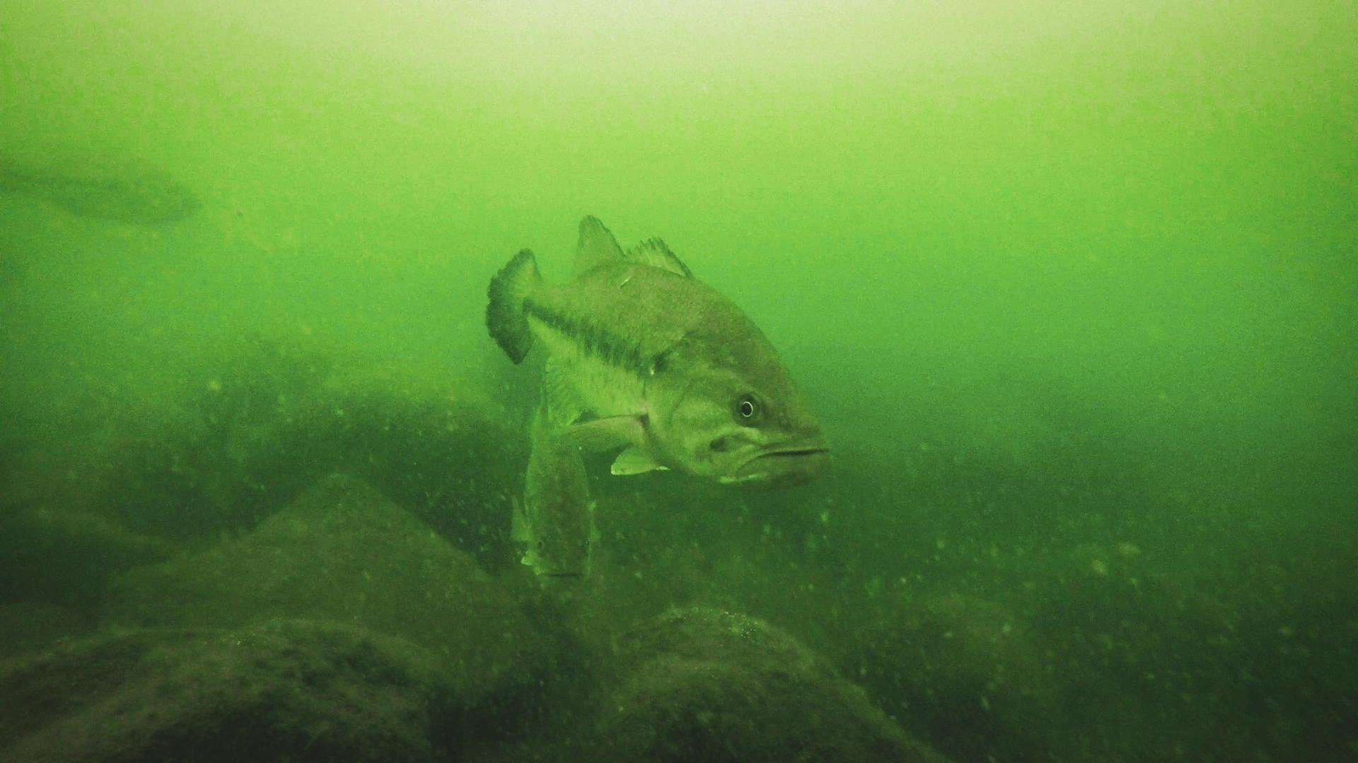 6 Proven Winter Bass Baits