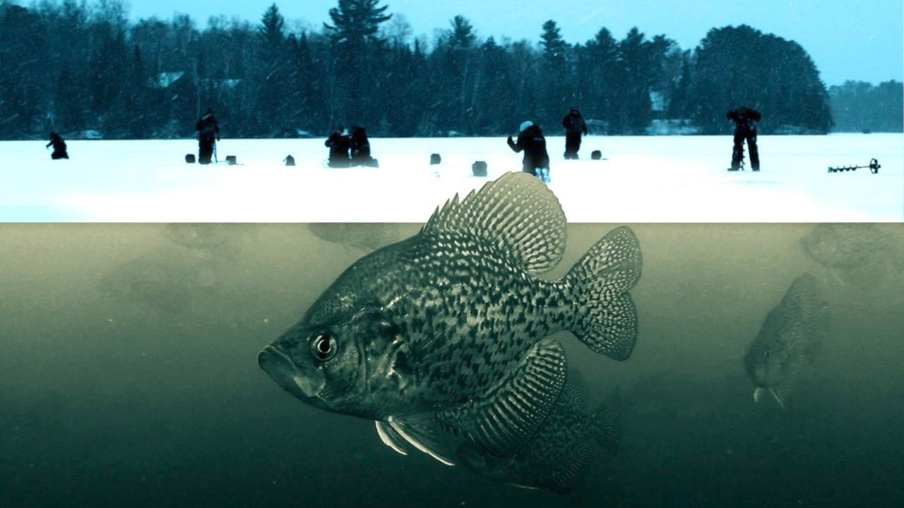 Ice Fishing Panfish – Find Crappies and Bluegills with Ease