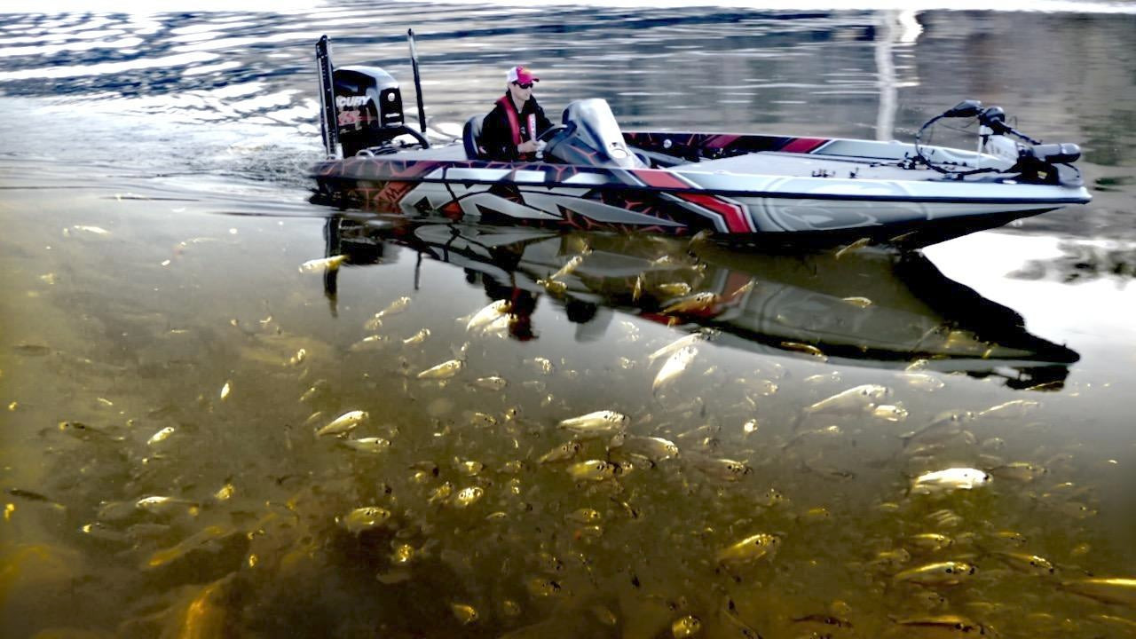 5 Jerkbait Fishing Tips for Year-Round Success